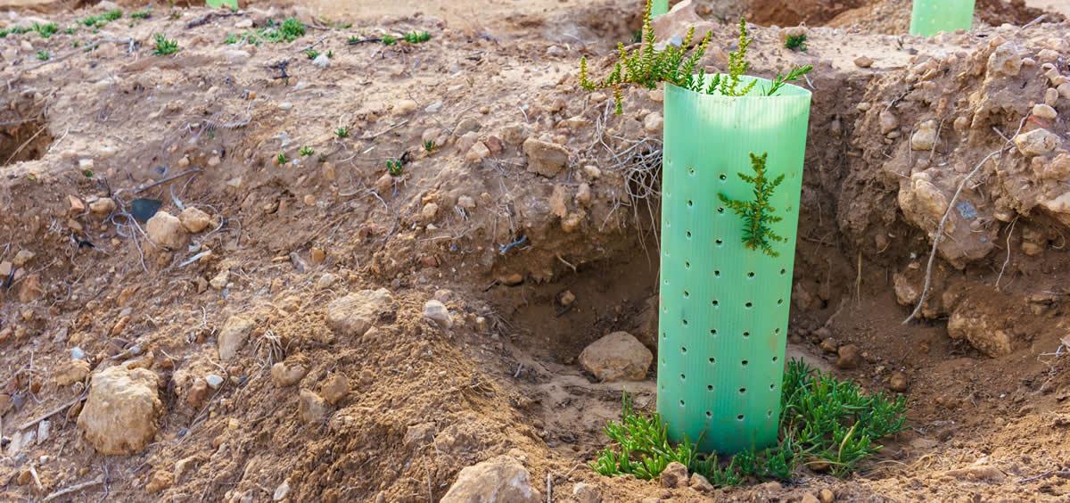 La iniciativa de Asisa Vida se enmarca en las políticas de sostenibilidad y cuidad del medio ambiente que impulsa el Grupo Asisa.