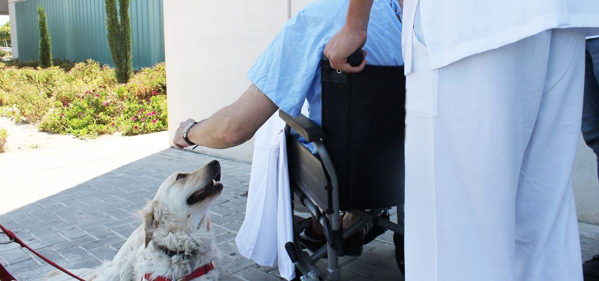 Ribera Salud crea un protocolo para permitir visitas de mascotas a los pacientes ingresados