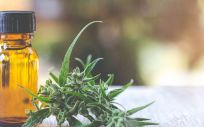Aceite de cannabis (Foto. Freepik)
