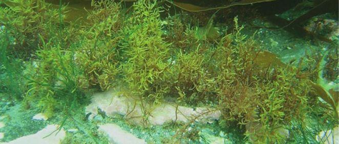 Algas (Foto. Estetic)