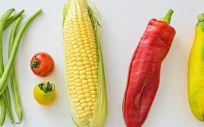 Vegetales (Foto. Pexels)