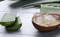 Aloe vera (Foto. Freepik)