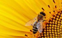 Apicia, la nueva firma de cosmética que aprovecha todo de las abejas y sus colmenas