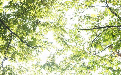 Tepezcohuite, el árbol con beneficios para tu piel