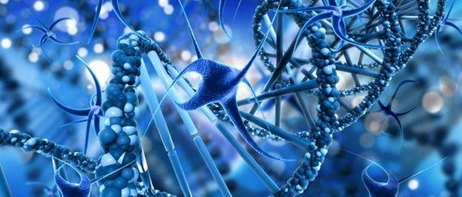 Celulas del cuerpo (Foto. Freepik)