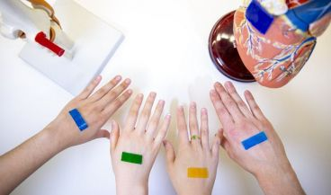 Diseñan un vendaje inteligente que acelera la curación de heridas (Foto. Instituto Wyss de la Universidad de Harvard)