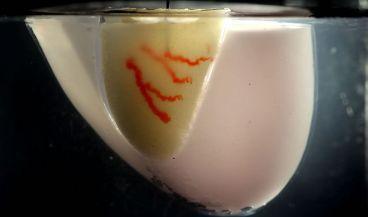 Un ejemplo de técnica que permite la impresión de órganos en 3D (Foto: Universidad de Harvard)