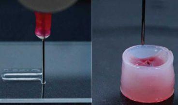 Esta nueva tina (en realidad es un gel) está fabricada con fibras de celulosa y nanopartículas poliméricas biodegradables (Foto. ETH Zurich)