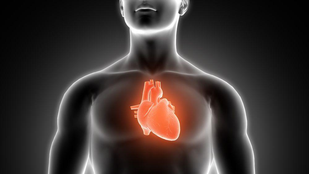 Diseñan una electrónica blanda para catéteres cardíacos avanzados (Foto. Freepik)