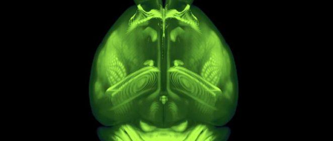 Una de las visiones del cerebro del ratón (Foto. Instituto Allen)