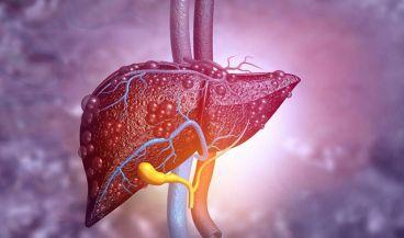 Un sensor puede detectar tejido hepático graso o con cicatrices (Foto. MIT)