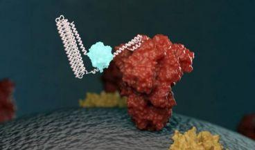 Nuevo biosensor que se une a una molécula objetivo y emite luz (Foto. Eurekalert)