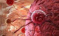 Los científicos crean un modelo de un embrión humano temprano a partir de células de la piel