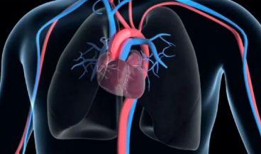 Diseñan un stent recubierto de exosoma para curar la lesión vascular