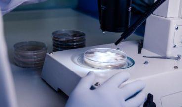 Científico analizando una muestra en el microscopio