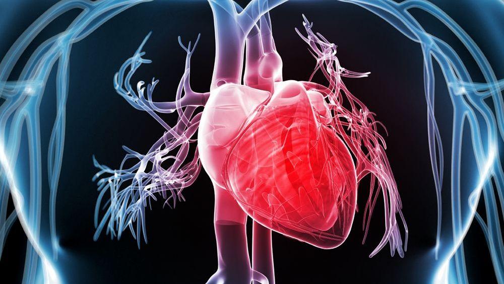 Diseñan un prototipo de corazón humano con hojas de espinaca