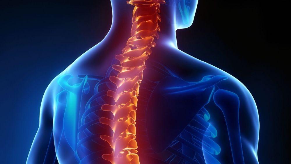 Devolver la conexión neural tras una lesión medular, más cerca con el bypass activo