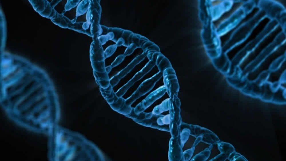 Las mutaciones germinales en el ADN incrementan la probabilidad de padecer cáncer.