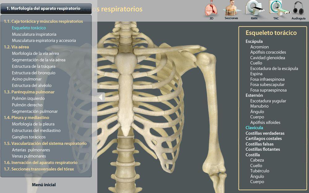 Corazones y pulmones virtuales,¿cómo se elaboran los modelados en 3D?