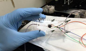 Un equipo de investigadores de la UCLA ha desarrollado una nueva técnica de impresión 3D que crea tejidos complejos para su uso en trasplantes o estudiar enfermedades.