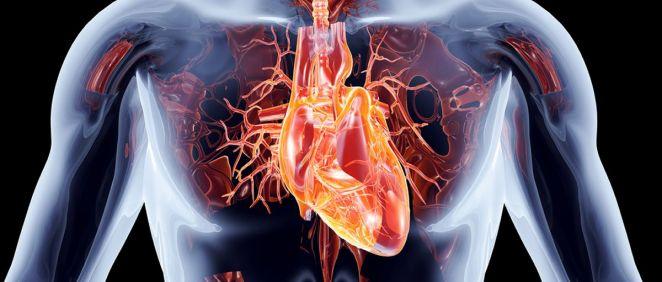 La bioingeniería permitirá crear órganos funcionales gracias a la impresión 3D
