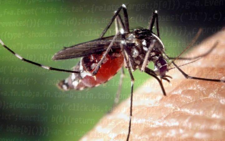 Una plataforma de inteligencia artificial diagnostica el virus zika