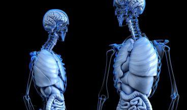 Celulosa vegetal para implantes óseos