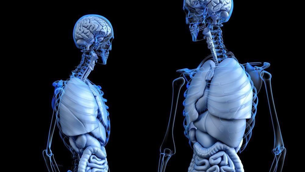 Implantes cerámicos impresos en 3D que ayudan al hueso a crecer.