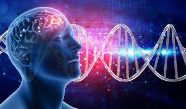Un modelo computacional avanzado capaz de simular con precisión la dinámica del cerebro