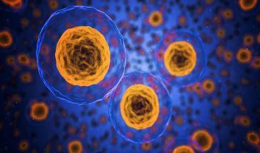La introducción de ARNm podría codificar cualquier proteína que carece de células