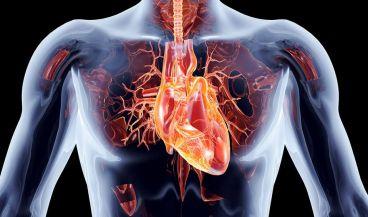 Un sensor biodegradable para monitorear el flujo sanguíneo tras la cirugía vascular