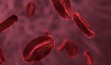 Investigadores descubren cómo imprimir redes vasculares en 3D