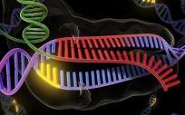 La edición genética CRISPR, capaz de crear cientos de mutaciones involuntarias