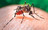 Cataluña se enfrenta a un riesgo moderado-alto de zika, dengue y chikunguña