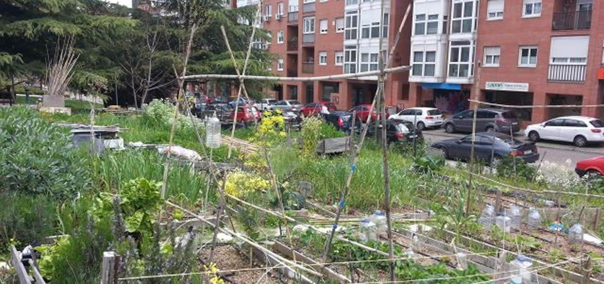 Huerto en la Comunidad de Madrid (Foto. UPM)
