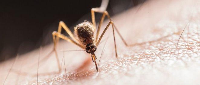 Mosquito (Foto. Ministerio de Ciencia)