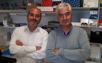 Alberto Ocaña y Atanasio Pandiella, investigadores del Ciberonc y coordinadores del estudio sobre los fármacos inhibidores (Foto. ConSalud)
