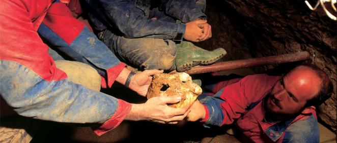 Descubrimiento del Cráneo 4 de la Sima de los Huesos en Atapuerca (Foto. ConSalud)