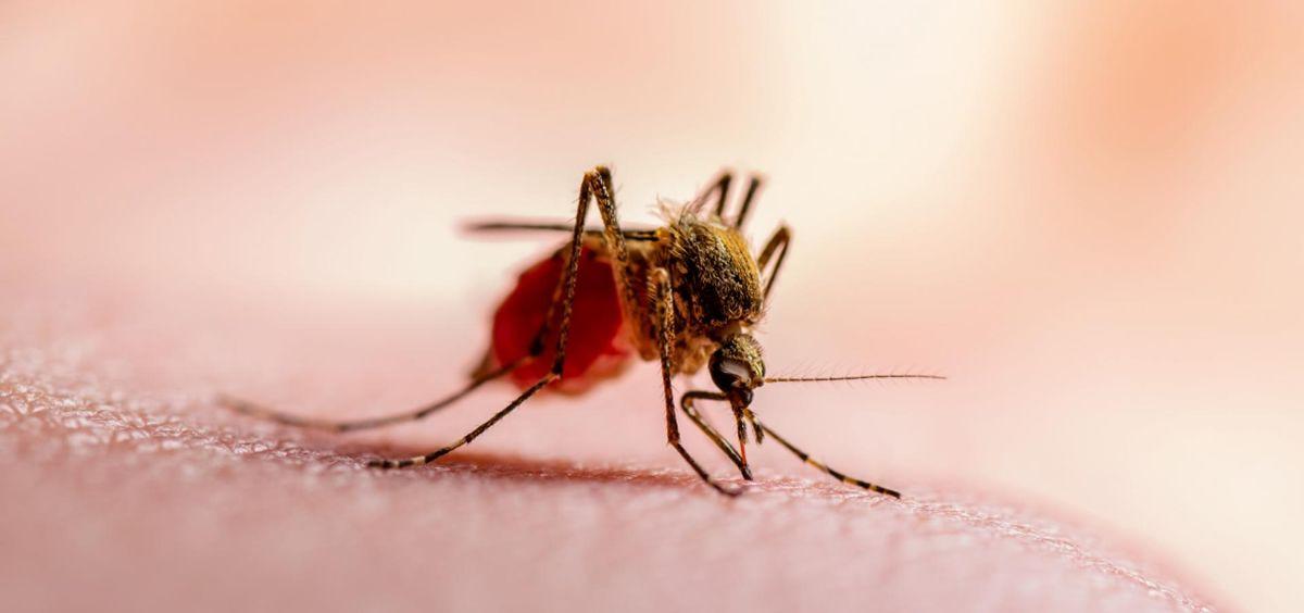 La malaria afecta a más de 200 millones de seres humanos (Foto. Comunidad de Madrid)