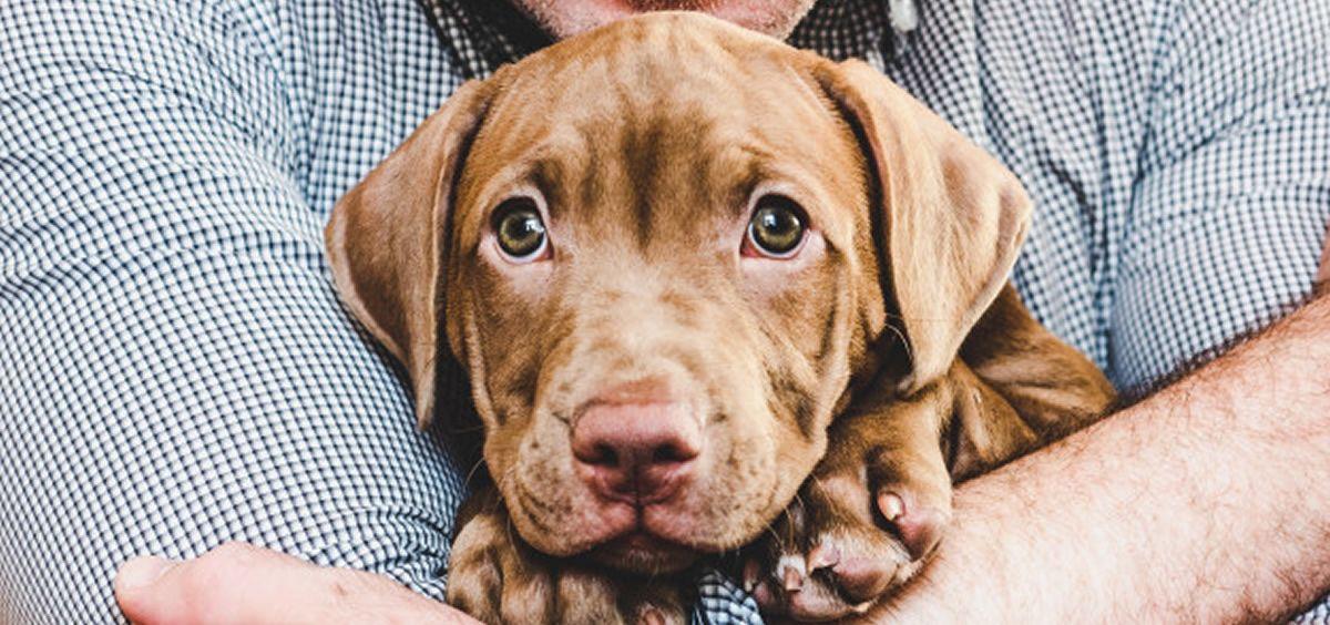 El aparente efecto protector del perro se presenta aún más si la exposición a la mascota se inicia desde el nacimiento del niño o se une al hogar antes de que cumpla los dos años (Foto. Freepik)