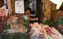 Mercado húmedo en China (Foto.Change.org)