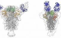 Las reconstrucciones muestran cómo dos anticuerpos diferentes (azules) se unen a la proteína de punta del virus del SARS-CoV-2. - (Foto. EP)