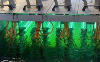 El coronavirus se extiende a través de las aguas residuales. (Foto. Europa Press)