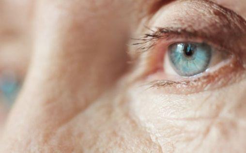 Investigadores españoles advierten sobre las enfermedades oculares emergentes como la thelaziosis