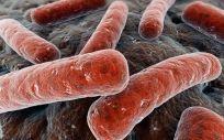 Mycobacterium tuberculosis, bacteria responsable de los casos de tuberculosis