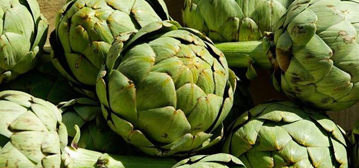 Investigan si el consumo de alcachofas reduce el riesgo de cáncer de próstata, de mama y la leucemia