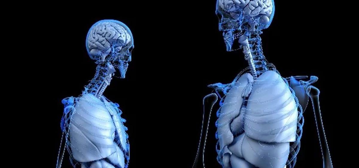 Crean un nuevo biomaterial para regenerar vasos sanguíneos y huesos