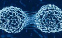 La regulación de proteínas, clave en la metástasis del cáncer