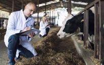 La FDA advierte sobre la automedicación con fármacos de uso veterinario. (Foto. Freepik)