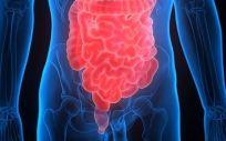 Intestino y colon (Foto: Donald Weitz/Flicker)